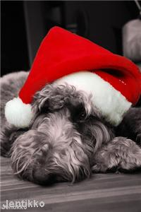 Pets 'will have Christmas to remember'